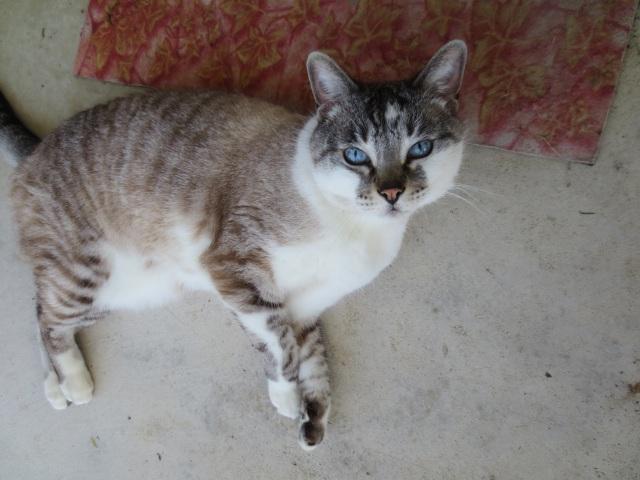 My cat Livia.